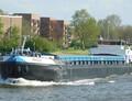 RS Rose in Breukelen.